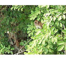 Island Monkey Photographic Print