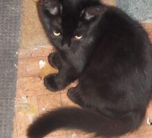 Kitten/looking really cute -(210812)- Digital photo by paulramnora