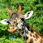 Giraffe by Brent McMurry
