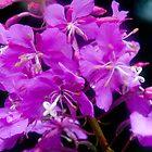 Purple Flower by Fredda Gordon