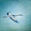 Great Blue Heron by Lynn Starner