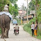 Chitwan Traffic by HelenPadarin