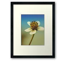 sweet sunshine Framed Print