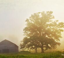 Perfect  Morning Fog by Nicole  McKinney