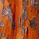 Bark 2 by melanie1313