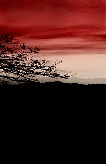 cherry sky by © Karin  Taylor