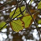 Leaves, have to love them! by Elinor Barnes