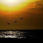 Pelican Sunset by Wonkstar