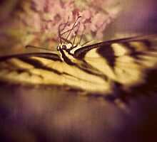 Contemplating the Swallowtail by Lightengr
