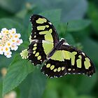 Green Butterfly by Hannah Welbourn