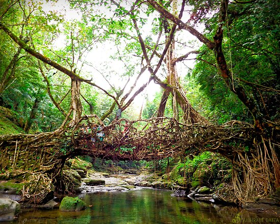 Bridge created by nature by Subhrajit Datta