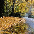 Golden Avenue - Mt Wilson NSW Australia by Bev Woodman