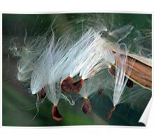 Wispy Seeds Poster