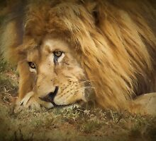 Rapt in Thought (Leo Panthera)  by Johanna26