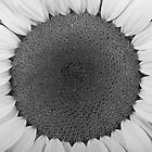 Sunflower Trance by Bo Insogna