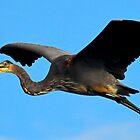 Great Blue Heron by George I. Davidson