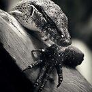 Sleeping Dragon by James McKenzie