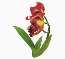 Frilly Red and Yellow Orchids by Susan Savad