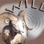 Big Horn Sheep, Ram by Sandra Fazenbaker