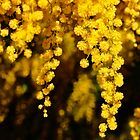 3D Wattle by D-GaP