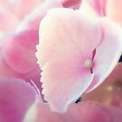 Soft Pink Hydrangea by Sharon Woerner