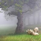 Misty morning by Lyn Evans