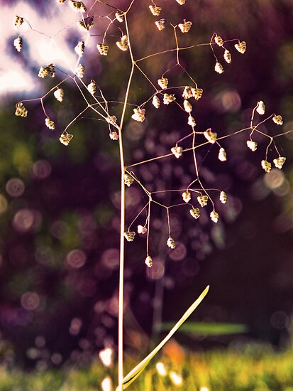 fairy lights by © Karin  Taylor