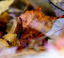 Leaves on the Ground by PASpencer