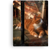 thomas in the greenhouse Canvas Print