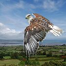 The Red-tailed Hawk over Dungarvin Bay  by Declan Carr
