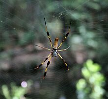 Banana Spider by Kevin McLeod