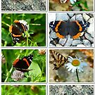 Butterfly Collage by MaeBelle