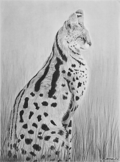 Serval by Heather Ward