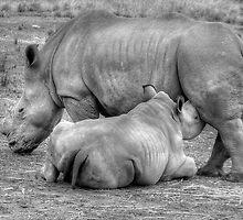 Mum and baby by Chris Brunton