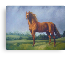 Man O'War Racehorse Canvas Print