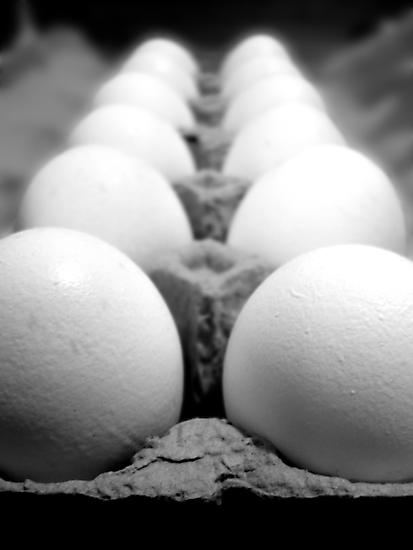 Egg Row by Jess Meacham