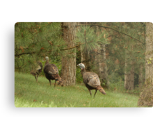 Holy Hill Turkeys Metal Print
