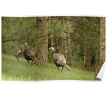 Holy Hill Turkeys Poster