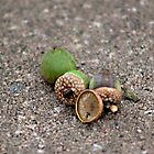 Acorns from the Tree by Sherry Hallemeier