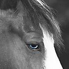 Beautiful Blue Eyes by Sherry Hallemeier