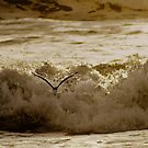 Bird Over Troubled Waters by CollinScott