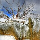Winter's grip, Mount Buffalo by Kevin McGennan
