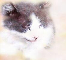 Snoozing by missmoneypenny