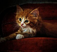 Kitten on the couch by Alan Mattison IPA