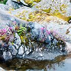 Alaskan Foliage in the Rocks by Fredda Gordon