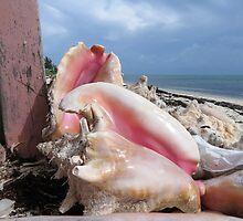 Pink shells.  by Anne Scantlebury