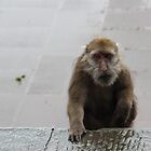 monkey in the rain by yossi rabinovich