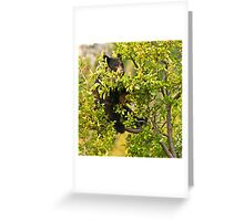 Bear Recliner, Black Bear Eating Chokecherries Greeting Card