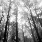 Misty Mountain Forest by Joel McDonald