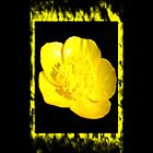 Framed Yellow flower by Kelly Walker